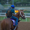 Lady Shipman<br /> Works at Santa Anita in preparation for 2016 Breeders' Cup on Oct. 30, 2016, in Arcadia, CA.