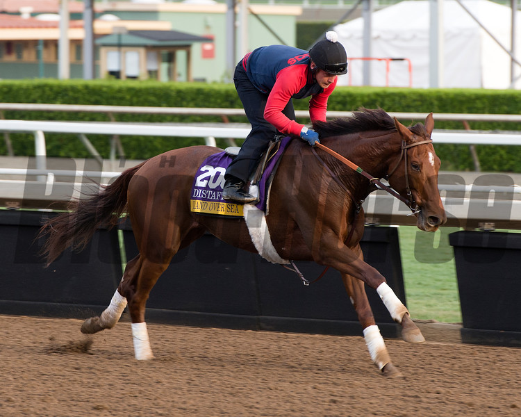 Land Over Sea<br /> Works at Santa Anita in preparation for 2016 Breeders' Cup on Nov. 1, 2016, in Arcadia, CA.