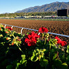 Horses and scenes at  Oct. 26, 2019 Santa Anita in Arcadia, CA.