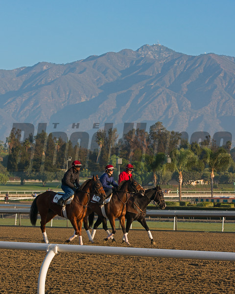 Caption:  horses on track with San Gabriel Moutains<br /> Breeders' Cup horses and connections at Santa Anita near Acadia, California, preparing for Breeders' Cup raceways on Nov. 1 and Nov. 2, 2013.<br /> BCWorks01RAW_10_27_13 image351<br /> Photo by Anne M. Eberhardt