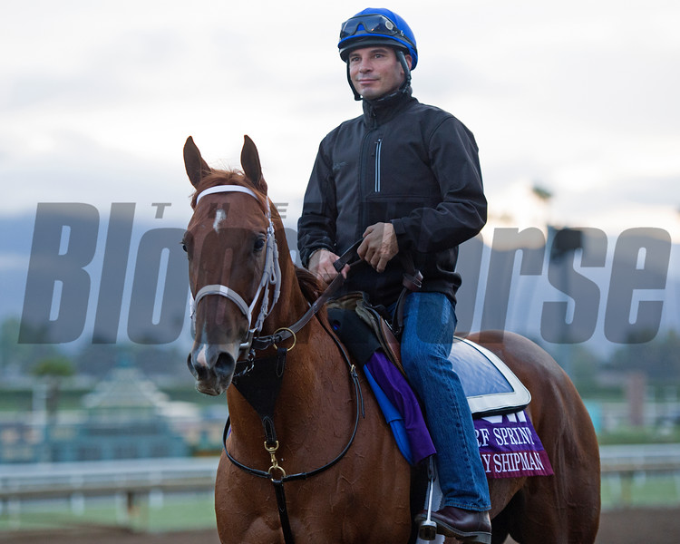 Lady Shipman<br /> Works at Santa Anita in preparation for 2016 Breeders' Cup on Oct. 31, 2016, in Arcadia, CA.