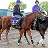 Caption:  Starspangled Heat<br /> Scenes at Santa Anita  on Oct. 29, 2014, in preparation for Breeders' Cup  in California.<br /> 1Origs10_29_14 image616<br /> Photo by Anne M. Eberhardt