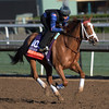 Catch a Glimpse gallops at Santa Anita Nov. 2, 2016 in preparation for her appearance in the Breeders' Cup in Arcadia, California.  Photo by Skip Dickstein