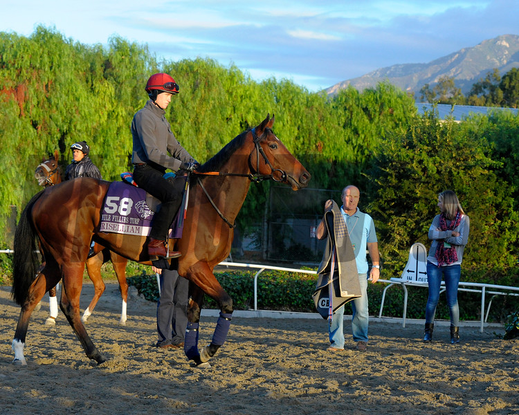 Caption:  Chriselliam<br /> Breeders' Cup horses and connections at Santa Anita near Acadia, California, preparing for Breeders' Cup raceways on Nov. 1 and Nov. 2, 2013.<br /> BCWorks1Jpegs_10_29_13 image405<br /> Photo by Anne M. Eberhardt