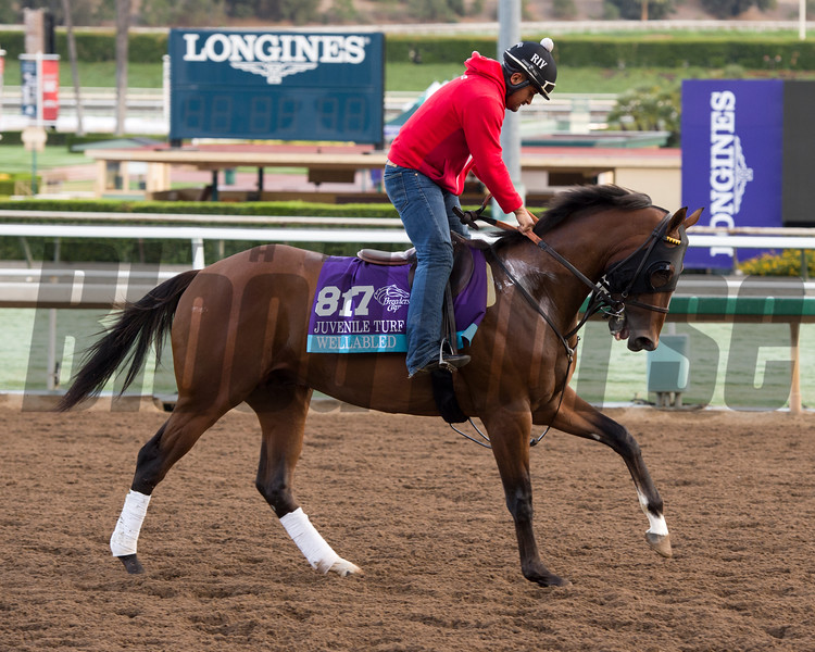 Wellabled, Juvenile Turf<br /> Works at Santa Anita in preparation for 2016 Breeders' Cup on Oct. 29 2016, in Arcadia, CA.