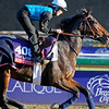 Caption:  Romantica<br /> Breeders' Cup horses and connections at Santa Anita near Acadia, California, preparing for Breeders' Cup raceways on Nov. 1 and Nov. 2, 2013.<br /> BCWorks1Jpegs_10_30_13 image399<br /> Photo by Anne M. Eberhardt