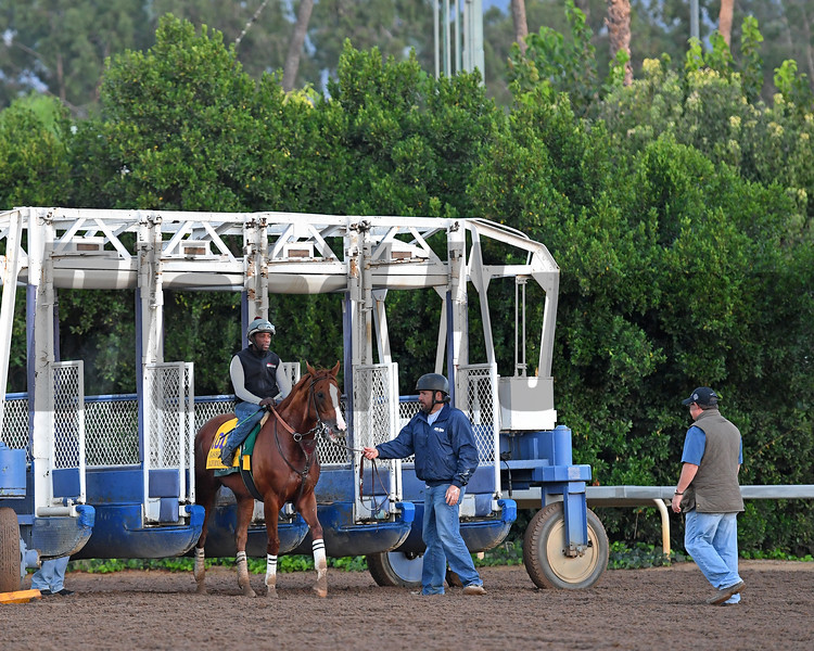 California Chrome schooling at the gate<br /> Morning scenes at Santa Anita in preparation for 2016 Breeders' Cup on Nov. 2, 2016, in Arcadia, CA.