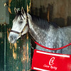 Enforceable in stables at Saratoga Race Course in Saratoga Springs, N.Y., on Aug. 28, 2021.