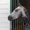 Frosted at Saratoga Aug. 7, 2016<br /> Skip Dickstein Photo