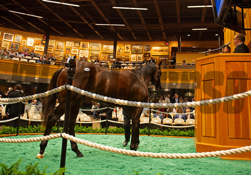 Scene with Hip 185 colt by City of Light out of Sca Doodle at Bluewater Sales<br /> Sales scenes at Fasig-Tipton in Saratoga Springs, N.Y. on Aug. 10, 2021.