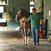 Letruska with regular groom Jose Diaz.<br /> Horses in training during Travers week in Saratoga on Aug. 27, 2021.