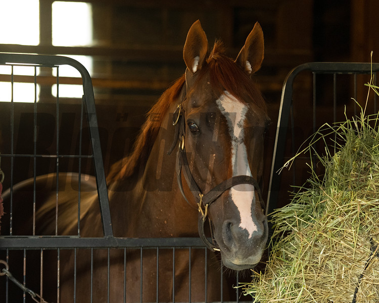Whitmore<br /> Saratoga racing scenes in Saratoga Springs, N.Y. on Aug. 5, 2021.