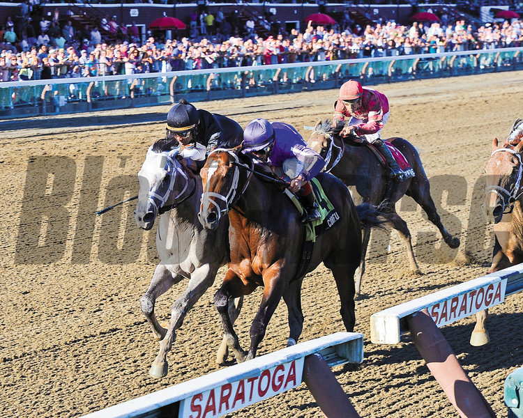 Cofu wins the Saratoga Special Stakes (gr. 2)<br /> Jockey: John Velazquez<br /> SARATOGA, Saratoga Springs, NY<br /> Purse: $200,000<br /> Date: August 11, 2013<br /> Class: Grade 2<br /> TV: HRTV/TVG<br /> Age: 2 yo<br /> Race: 10<br /> Distance: Six And One Half Furlongs<br /> Post Time: 5:45 PM<br /> Photo by: Adam Coglianese/NYRA