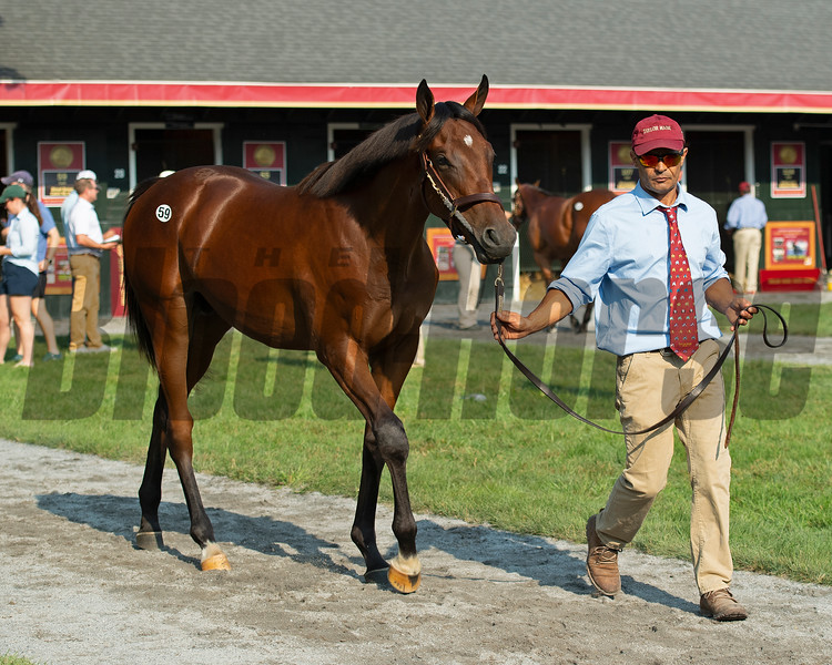 Hip 59 colt by Street Sense out of the Catch My Eye at Taylor Made Sales Agency.<br /> Saratoga sales scenes at Fasig-Tipton in Saratoga Springs, N.Y. on Aug. 7, 2021.