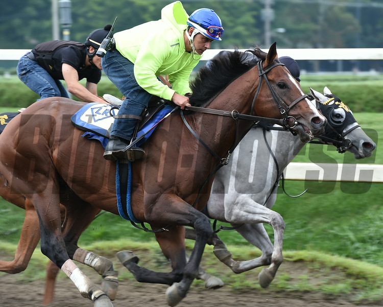 Palace Malice at Saratoga 8/24/2014.<br /> Coglianese Photos/Susie Raisher
