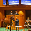 Hip 71 filly by Into Mischief out of Curlina from Mulholland Springs<br /> Sales scenes at Fasig-Tipton in Saratoga Springs, N.Y. on Aug. 9, 2021.
