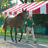 Hip 155 Roadlesstraveled filly bby Quality Road out of More Hennessy at Lane's End, agent<br /> Saratoga sales scenes at Fasig-Tipton in Saratoga Springs, N.Y. on Aug. 7, 2021.