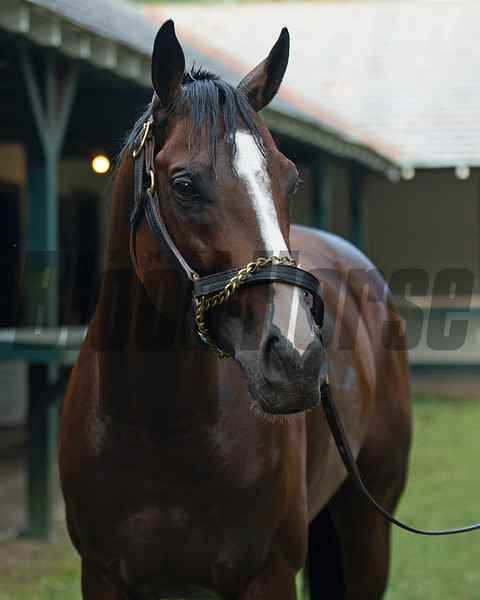Front Run the Fed<br /> Saratoga racing scenes in Saratoga Springs, N.Y. on Aug. 5, 2021.