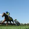 Dayatthespa wins the Yadda Stakes at Saratoga 8/24/2014.<br /> Coglianese Photos/Adam Mooshian