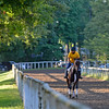 Training scenes at Saratoga, August 2016, in Saratoga Springs, N.Y.