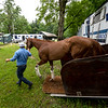Horses arrive from trainer Mark Hennig's barn at Belmont Race Track  at the Saratoga Race Course  Monday July 13, 2021 in Sartoga Springs, N.Y. . Photo by Skip Dickstein