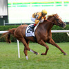 Wise Dan bounds home under John Velazquez to win the Fourstardave.<br /> <br /> Photo by Coglianese Photos.