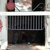 Big Beast naping after racing at Saratoga. 8/24/2014<br /> Coglianese Photos/Susie Raisher