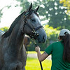 Hip 92 Failsafe colt by Tapit out of Feathered at Lane's End<br /> Saratoga sales scenes at Fasig-Tipton in Saratoga Springs, N.Y. on Aug. 7, 2021.
