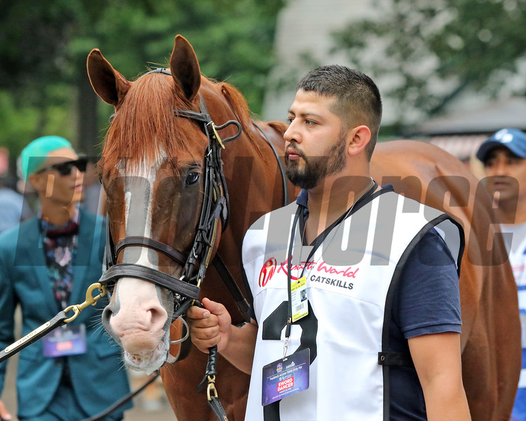 Gufo walking to the paddock prior to winning the 47th Running of The Sword Dancer (GI) at Saratoga on August 28, 2021. Photo By: Chad B. Harmon