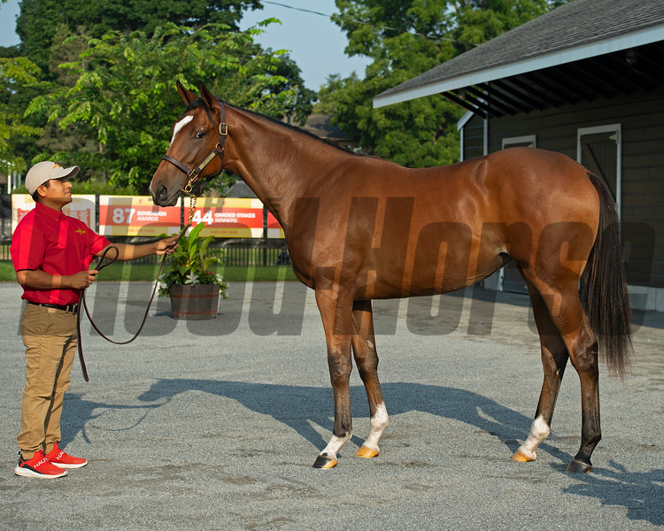 Hip 74 filly by Street Sense out oof Danceforthecause at Sam-Son Farm<br /> Saratoga sales scenes at Fasig-Tipton in Saratoga Springs, N.Y. on Aug. 7, 2021.
