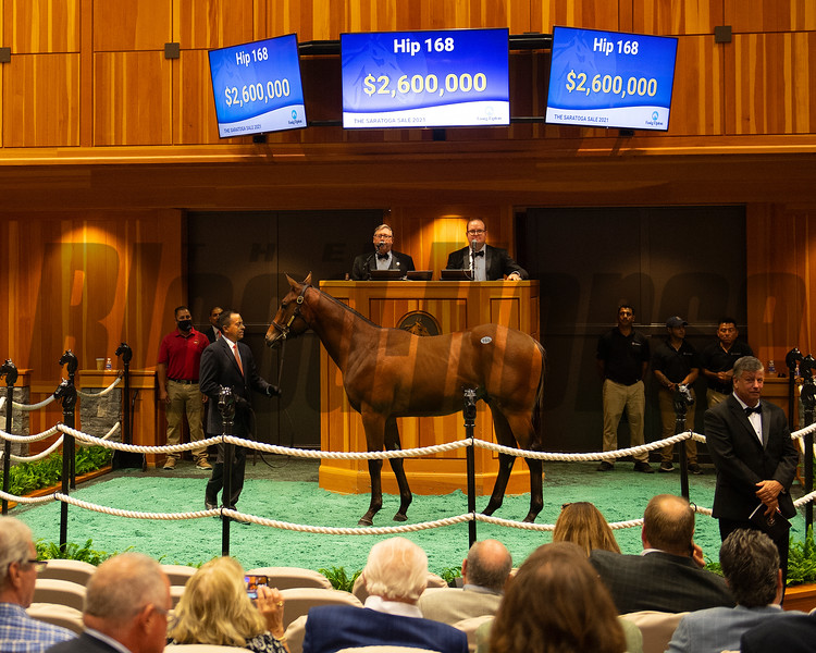 Hip 168 colt by Into Mischief out of Paola Queen from Gainesway<br /> Sales scenes at Fasig-Tipton in Saratoga Springs, N.Y. on Aug. 10, 2021.
