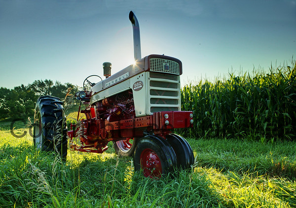 Print #119 Cornfield 560<br /> 1959 Farmall 560 owned by Jerry Mez. Photographed near his Farmall-Land Museum in Avoca, Iowa.