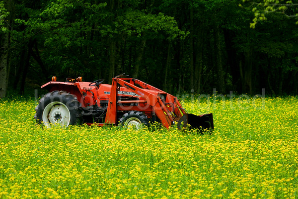 Tractor in the Field - 6/2/06