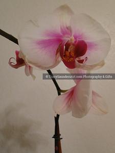 Nature 081119 TracySaundersArt Yes (4)