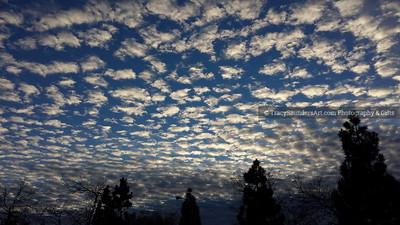 Nature 081119 TracySaundersArt Yes (34)