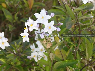 Nature 081119 TracySaundersArt Yes (21)
