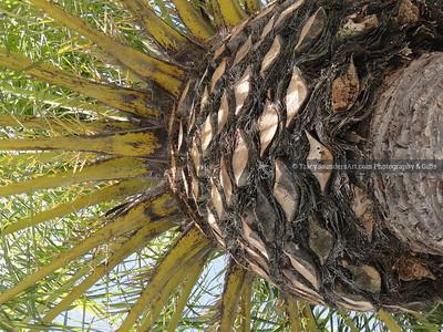 Nature 081119 TracySaundersArt Yes (12)