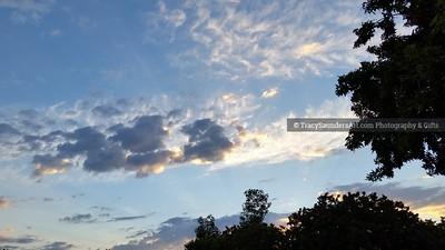 Nature 081119 TracySaundersArt Yes (19)