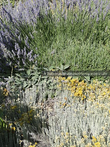 Nature 081119 TracySaundersArt Yes (14)