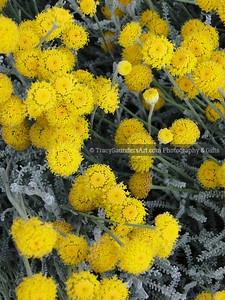 Nature 081119 TracySaundersArt Yes (8)