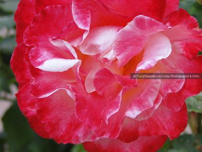 Nature 081119 TracySaundersArt Yes (20)