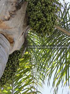 Nature 081119 TracySaundersArt Yes (9)