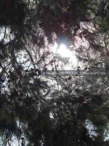 Nature 081119 TracySaundersArt Yes (156)