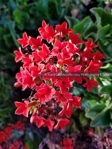 Nature 081119 TracySaundersArt Yes (15)