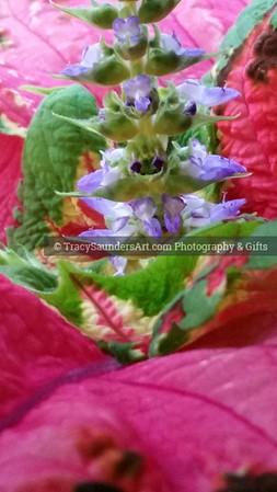 Nature 081119 TracySaundersArt Yes (17)
