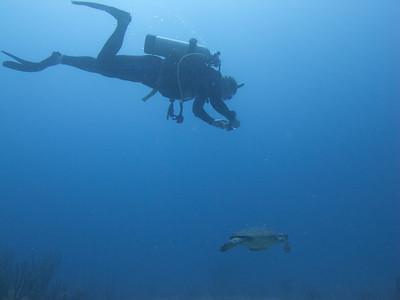 BVI - Nick & Lucy's Underwater Pics