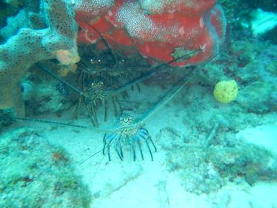 Guadeloupe 2015 - Underwater Pics (Jen's Coolpix Tough)