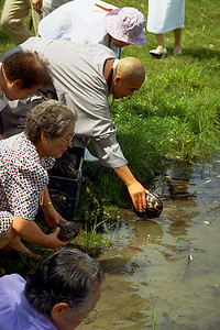 Members of Won Gak Sa Release Turtles as an Act of Compassion (Salisbury Mills, NY)