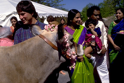 The Cow Darling is First to Behold the Goddess Lakshmi (Ashland, MA)