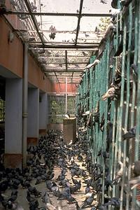 Birds at a Jain Bird Hospital (Delhi, India)
